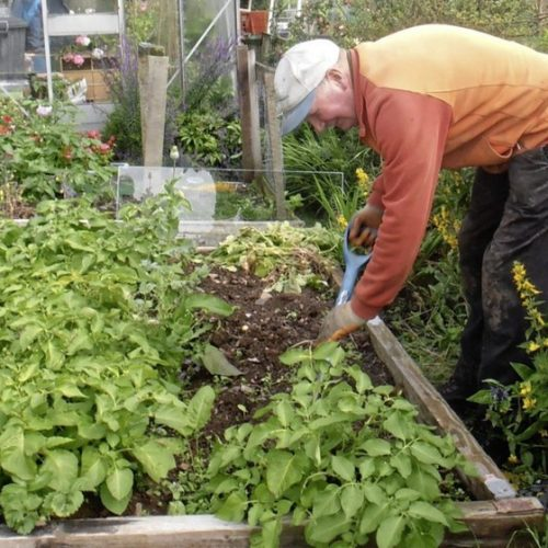 Pro Tips For Staying Healthy and Safe While Gardening